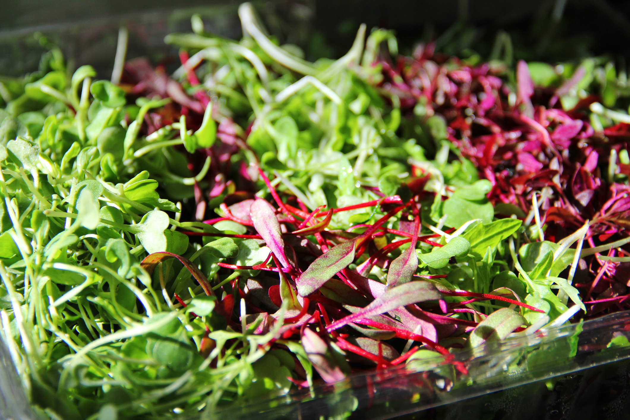 Gorgeous assortment of Micro greens