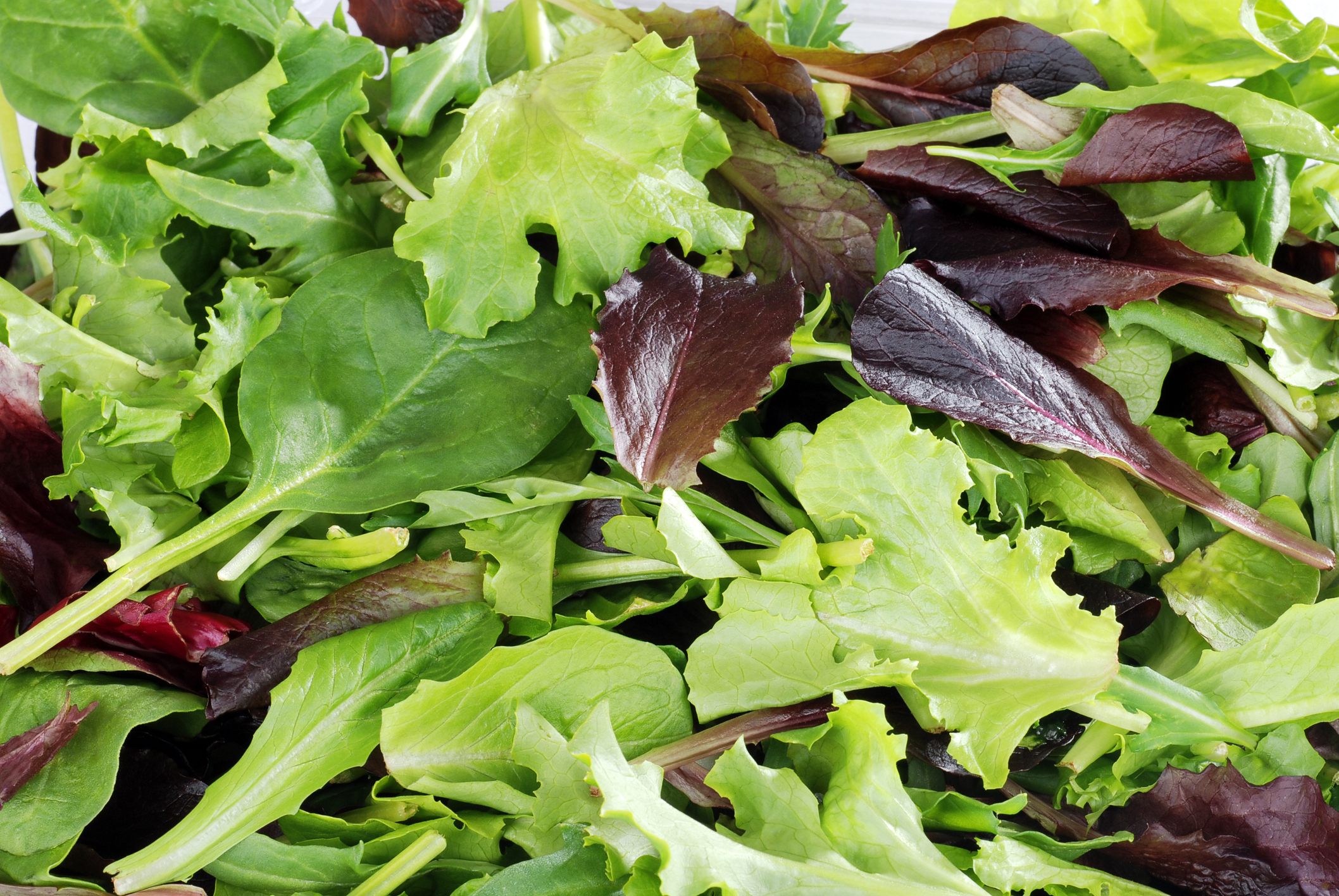 macro of Mixed greens lettuce background